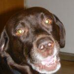 Dog Max Hampel (Image: FAU)