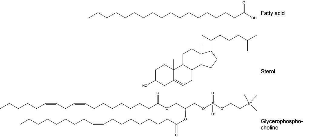 Structures of a fatty acid, a sterol and a glycerophosphocholine