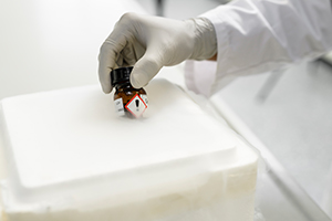 The picture shows an opened polystyrene box filled with liquid nitrogen. Vapor clouds rise from it. You can see the right hand of a man up to his elbow, wearing disposable gloves and a lab coat. The hand holds a small brown bottle in the liquid nitrogen. A sticker is attached to the brown vial with a black plastic lid. The sticker is square, has a red border and a large black exclamation mark on a white background.