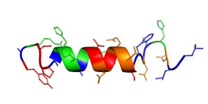 Peptide structure